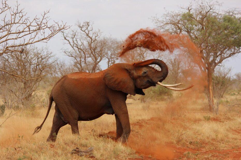 animal wildlife elephant ivory