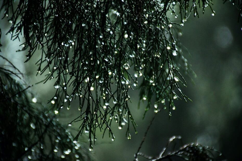 close up photography of wet leaves