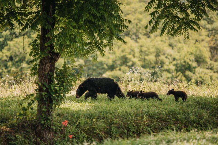 black cow on green grass field